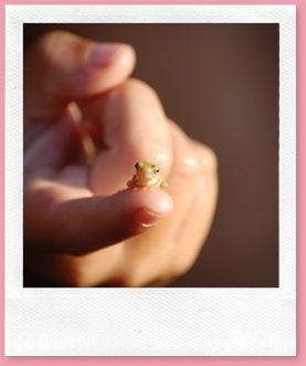 So littowl! #cute #frog #tiny #animal Repinned from Josie Portz: Awww, so cute!