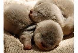 cute baby animals sleeping - Bing Images
