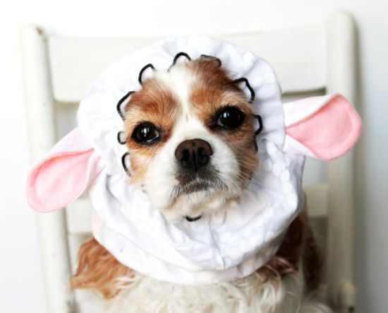 Sheep Ears Dog Snood / Pet Hat / Long ear covering / Specialty Snood