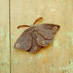 Handmade craft moth (upcycled) . Beautiful! Gallery - Willowynn