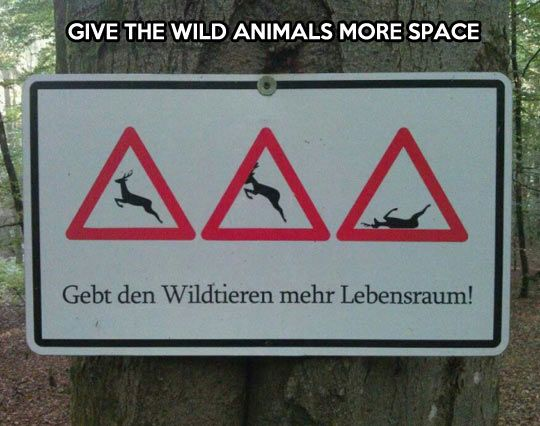 Wild animals need more space…