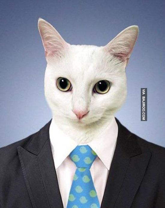 funny cat with business suit1 Funny picdump of the day (30 Photos)