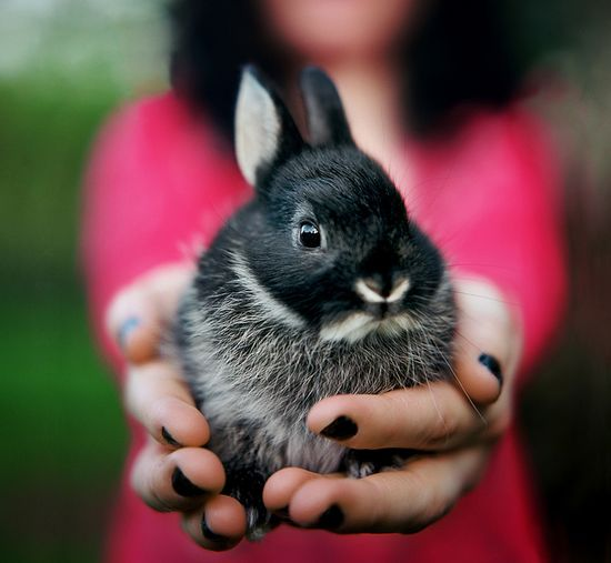 {bunny in hand} I want to hold a bunny.