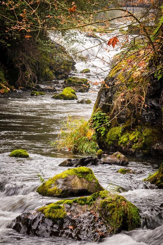 Deschutes River. Tumwater Falls Park. Olympia, Washington .