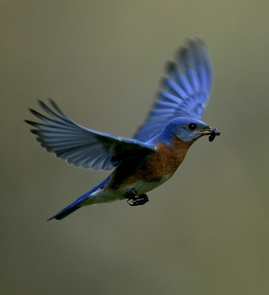 Gorgeous Blue Bird Photo