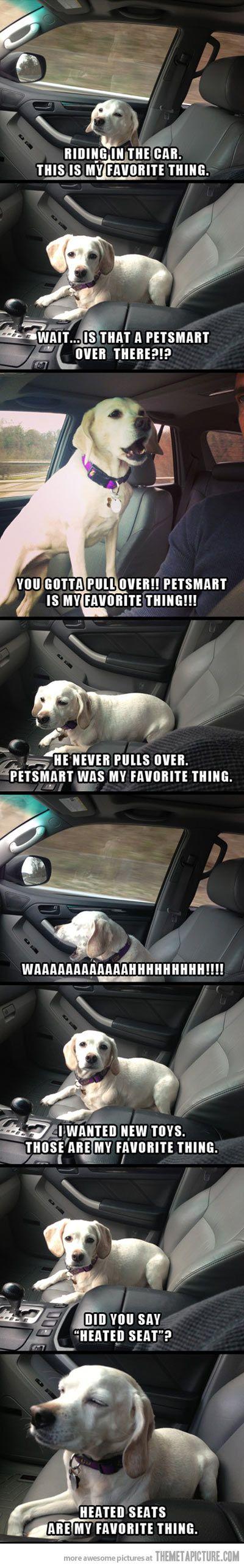 I am this dog.