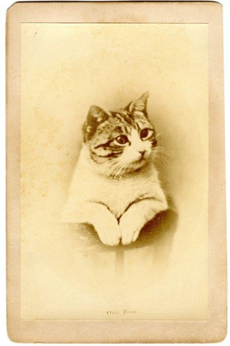 'Our Tom'  Portrait of a Kitten - 1870s