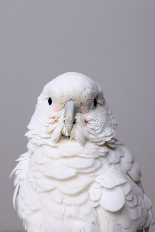 I love you bird.