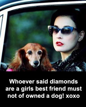 Dogs are best friends ?