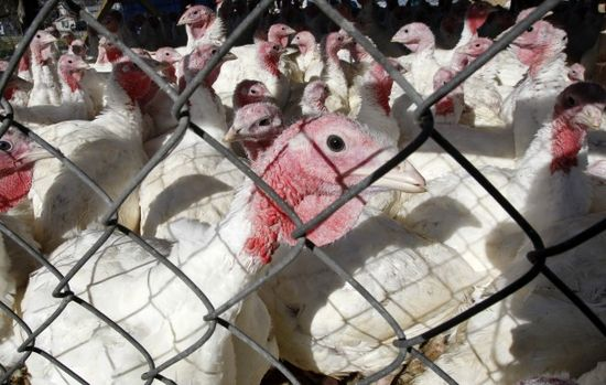 That turkey on your plate could use some more industry competition - The Washington Post