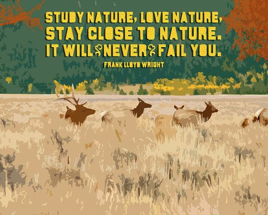 Study Nature. Love Nature. - FLW Art Print by Earmark