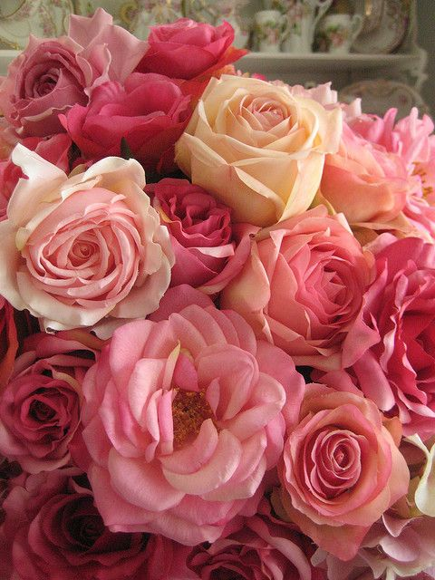 Pink roses  ??