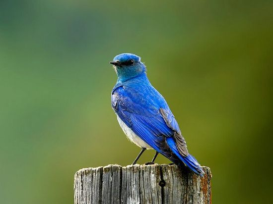 Wild bird photography - Animal Pictures