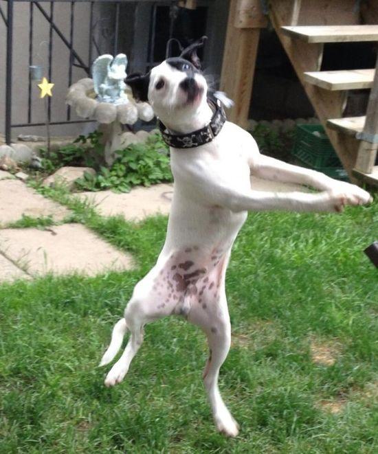 Capone dances…Gangnam style!