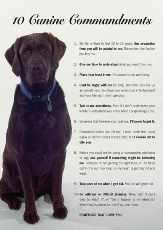 10 canine commandments, they r our children