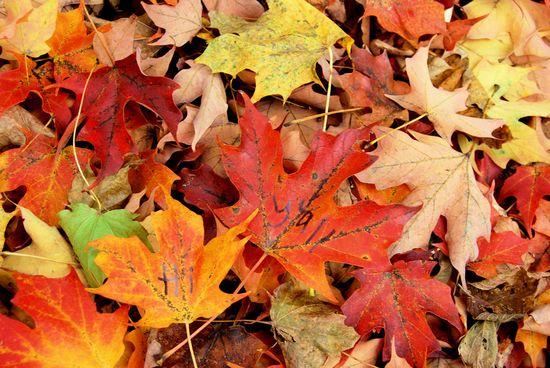 Got Leaves?