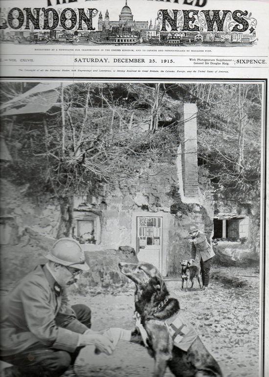 London News December 25, 1915:  War Dogs.