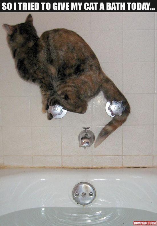 Wish I had a cat like that!