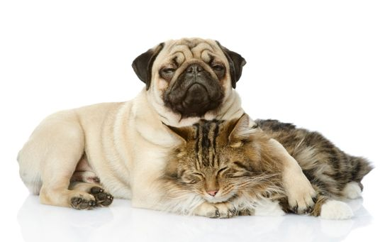#Pet Health Care: What You Should Know - Renter Resources