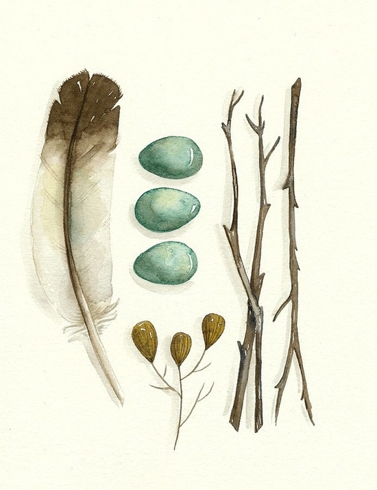 $12.00  6x8 print  feathers, twigs, eggs  #etsy #watercolor #handmade