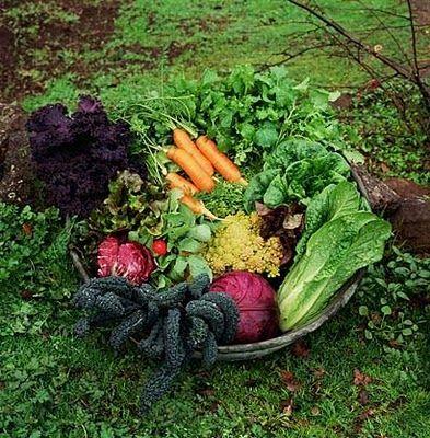 Basics of Planning Vegetable Garden- I love the pics!