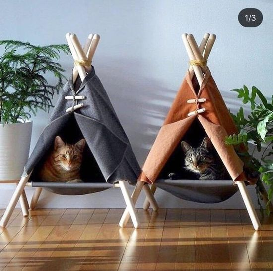 Cat  Board