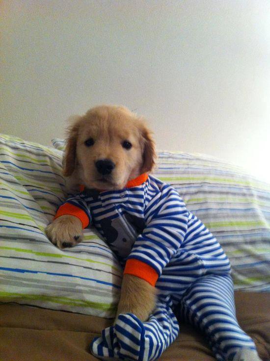 puppy in pjs.
