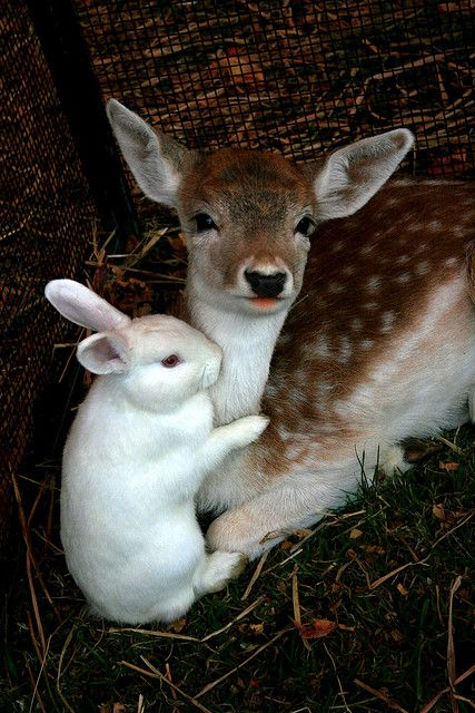 fawn getting a hug from a rabbit