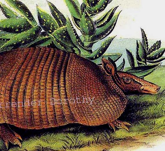 Nine Banded Armadillo, John J Audubon Naturalist Wild Animal Natural History Lithograph Print