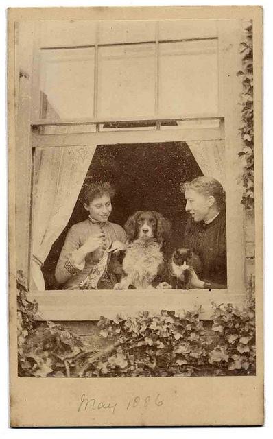 window by Libby Hall Brittany Spaniel Dog Photo, via Flickr