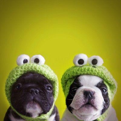 puppy dogs in crochet frog hats