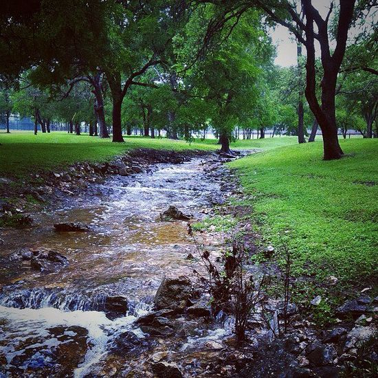 Love this scenic view on campus. Especially right after the rain.