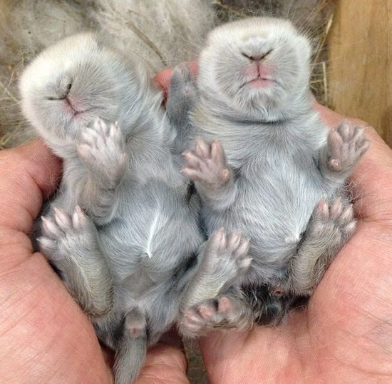 Baby Animal Somethings!