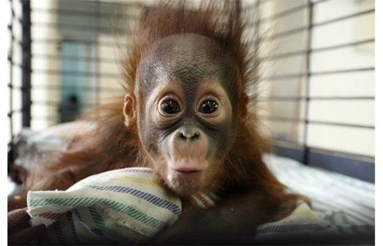 Photos: Baby animals of the world for October