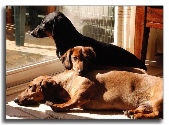 Sun worshippers