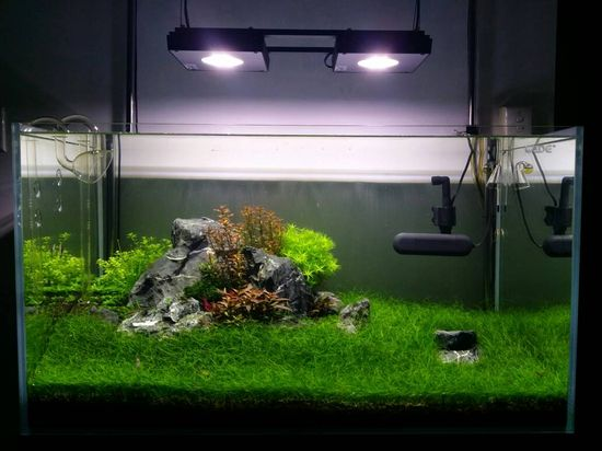FishLore.com - Robs 3 ft planted attempt