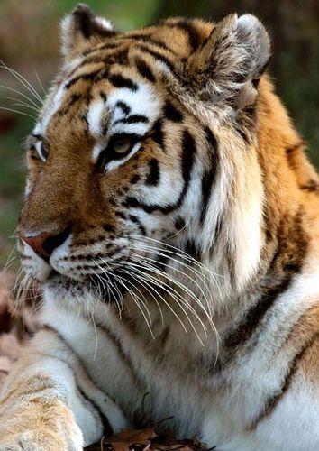 endangered animals - Google Search