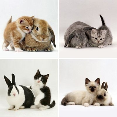 Color Coded Kittens and Rabbits :+) #cat #pet #animal #pals