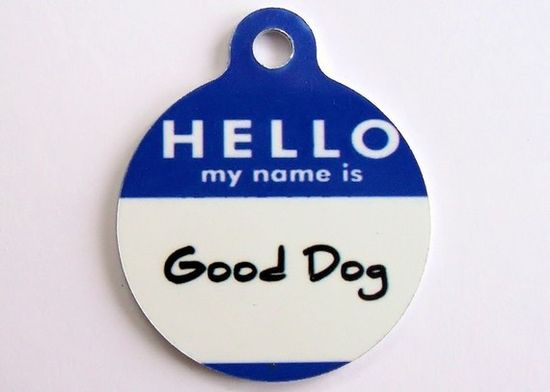 Hello My Name Is... customized Dog ID Tags. oh, yes!