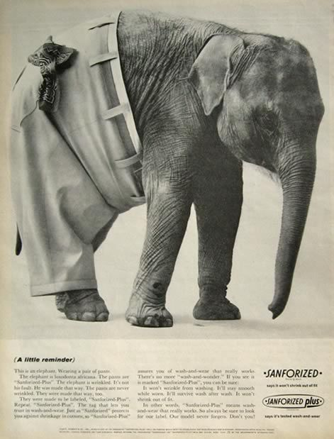 Do these pants make my ass look big?  (1963 Sanforized Plus Ad ~ Elephant Wearing Pants Photo)