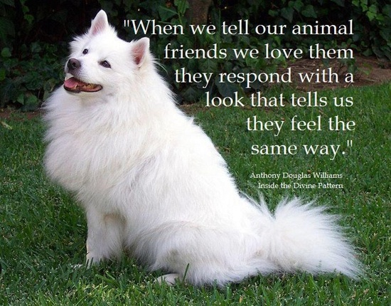 We should all love our pets like they're truly family.