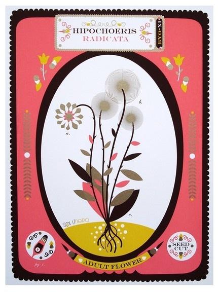 Dandelion Silkscreen by Sollinero