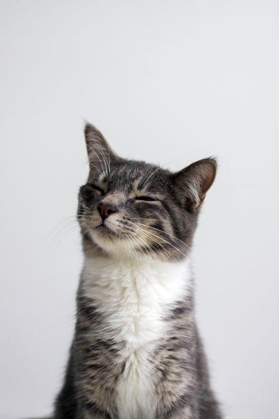 happy cat.