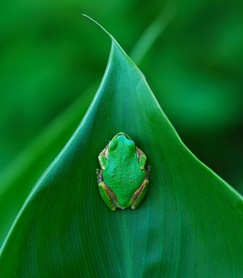 green frog, green leaf, green green green