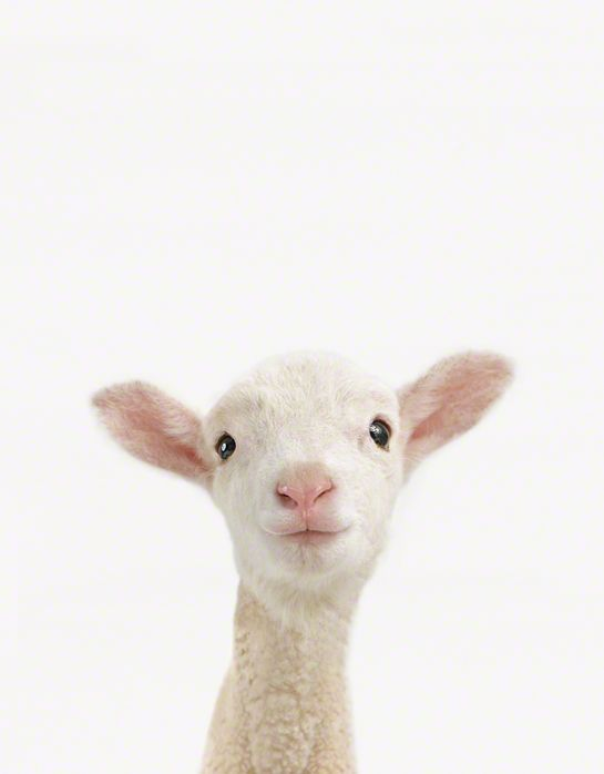 Most Adorable Baby Animal Prints www.mymodernmet.c...