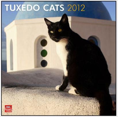 Tuxedo Cat    ? ? ?