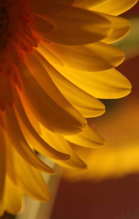 petals only