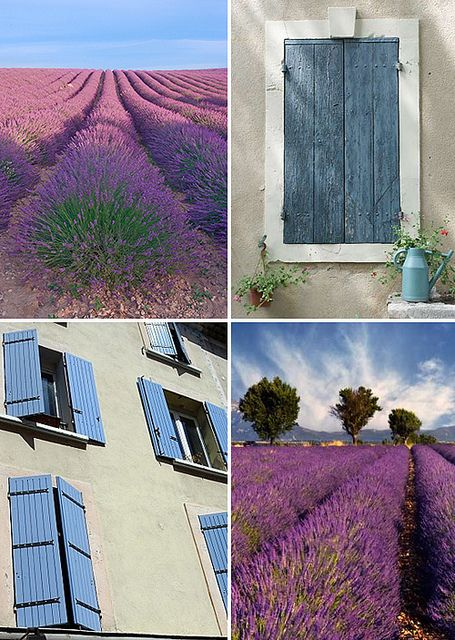 Lavender fields and shutters