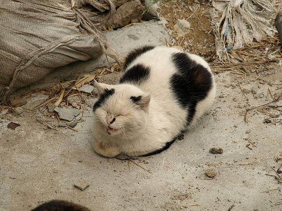 """i love your dots"" ???? (onomichi cat), via Flickr."
