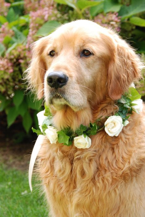 All dressed for the wedding! Your dog in the wedding ad a special touch.